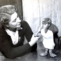 Ann Hogarth con Peregrine Penguin. Títere de hilos. Fotografía cortesía de Colección: The National Puppetry Archive