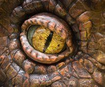 Eye of the Allosaurus by Creature Te<em>c</em>hnology Co. (West Melbourne, Vi<em>c</em>toria, Australia). Photo: Niklas Passmann