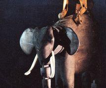 Elephant et Baboon (L'éléphant et le babouin), dans <em>The Flight of Babuscha Baboon</em> (1988) par Movingstage Marionette Co. (Hackney, Londres, Royaume-Uni), dans le théâtre de la compagnie, le Puppet Theatre Barge (Tamise), mise en scène : Juliet Rogers, conception et fabrication : Gren Middleton. Marionnettes à fils, hauteur : 50 cm. Photo: Gren Middleton
